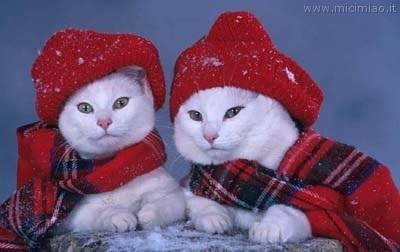 Mici in inverno mici miao il gatto foto di gatti e for Immagini inverno sfondi